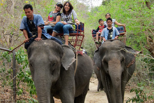Elephant Ride - Jungle Trekking