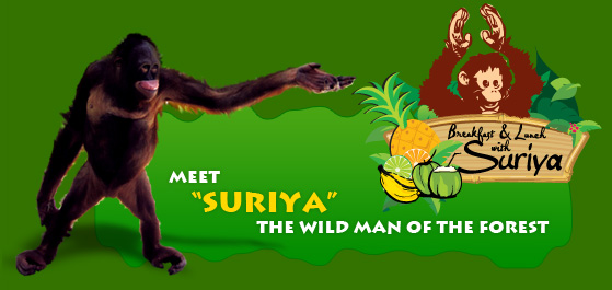 Breakfast with Suriya—The Friendly Orangutan