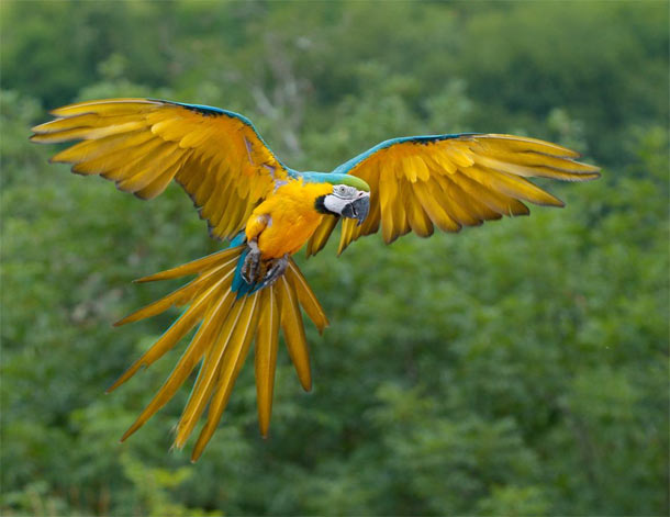Rainforest Birds Flying These birds fly together in a