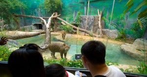 Wildlife Attractions in Pattaya
