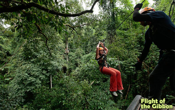 Flight of The Gibbon - Thailand Excursion
