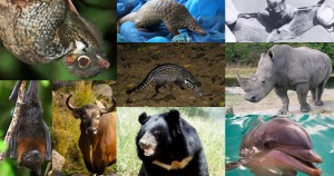 Endangered Animals In Thailand