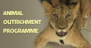 Animal Outrichment Programme