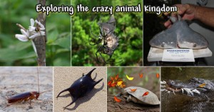 10 Weirdest Animal Stories