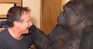 Robin Williams Death Koko Gorilla